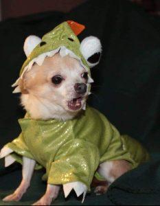 Oscar the Dinosaur