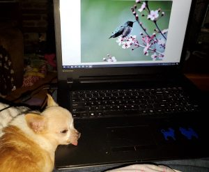 Helping mom with her photos