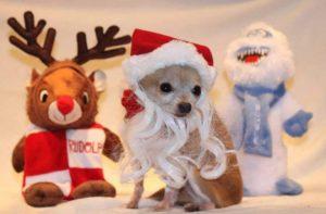 Oscar as Santa