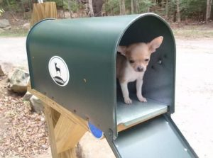 Waiting for the mail man