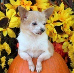 Our little pumpkin