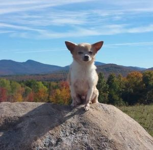 Oscar, king of the mountain